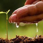 полив ростка