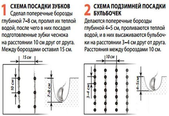 Схема посадки зубков