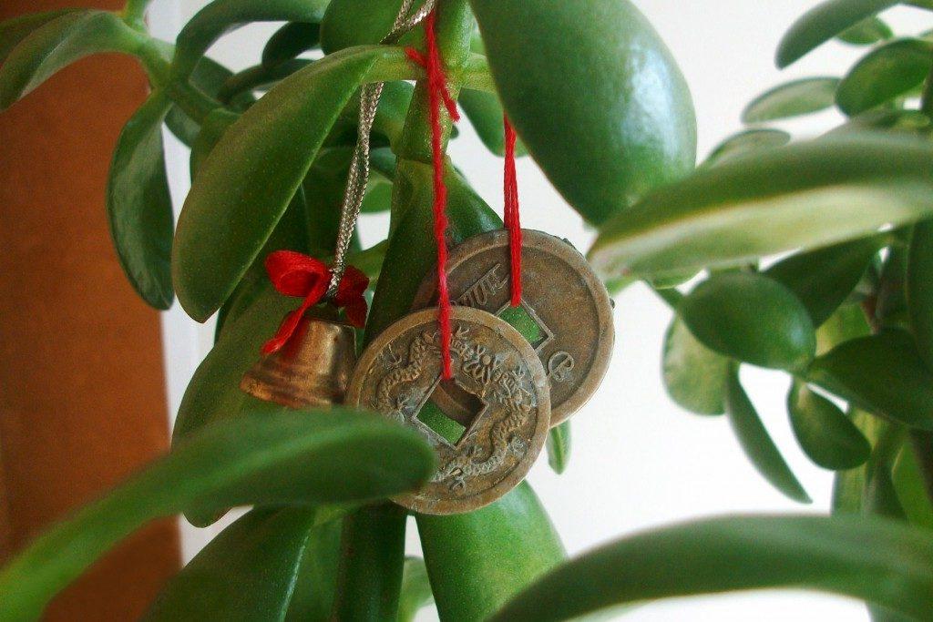 толстянка монеты