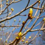 сад весна