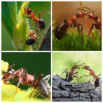 муравьи2